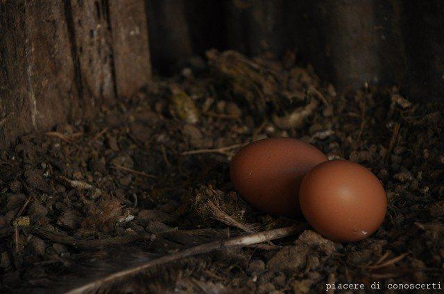 uova galline