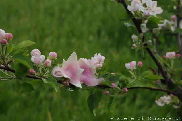fiorellino in feltro
