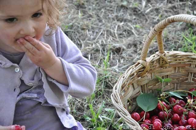 noccioli ciliegia