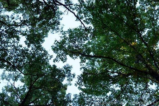 bosco nomentana